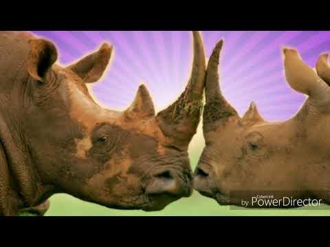 el-rinoceronte-audio-libro-parte-3