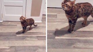 Cat's Meow Sounds Like Handball