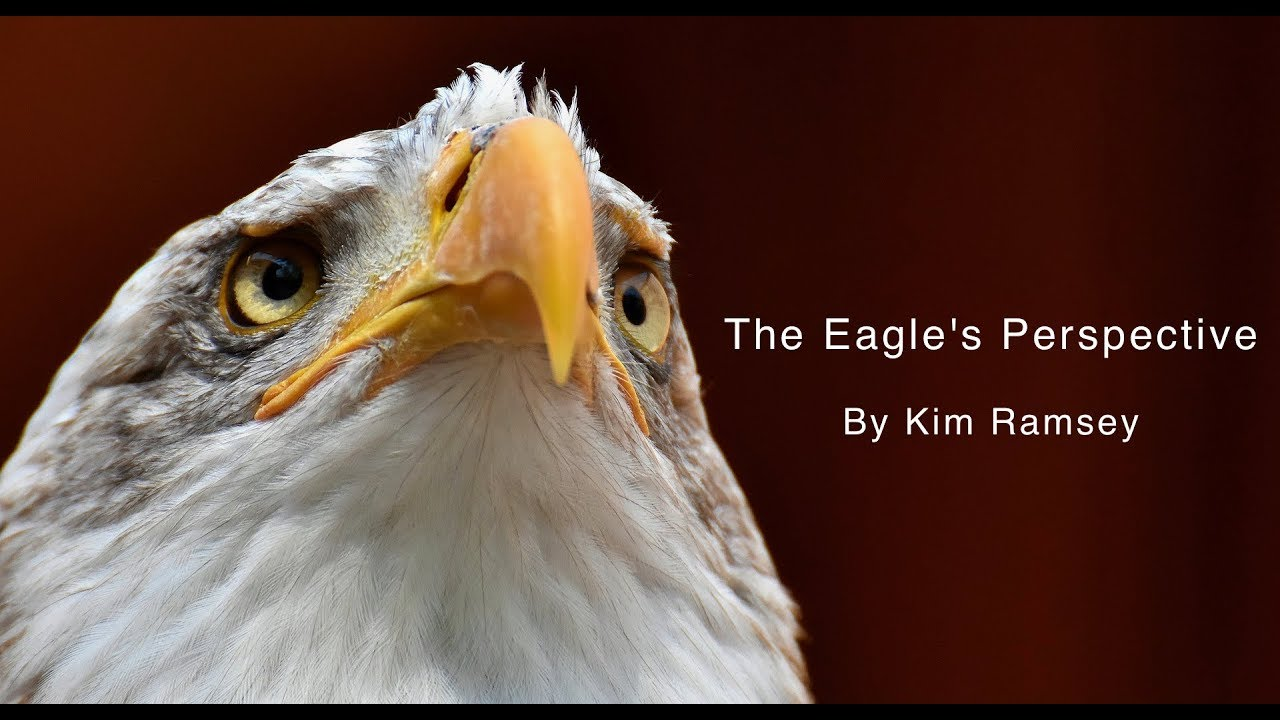 The Eagle's Perspective
