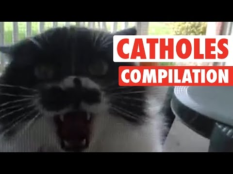 Angry Cat-holes || Super Pissed Off Cats Compilation