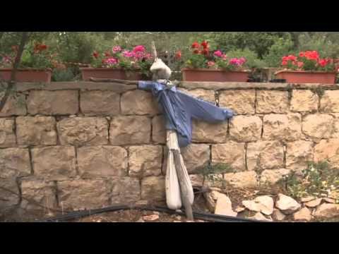 Jerusalem community garden