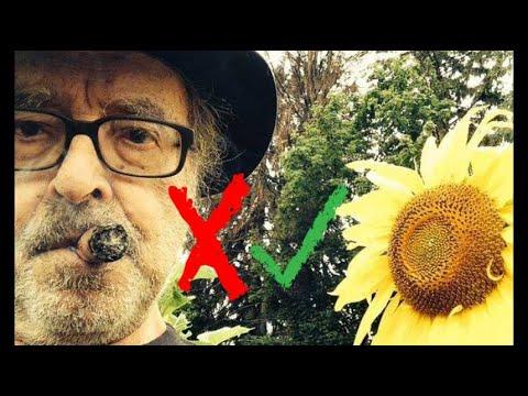 """Festival de Cannes: """"Le livre d'image"""" de Godard réussit-il le test de Bechdel?"""