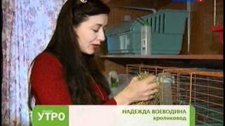 Смотреть видео питомник кроликов