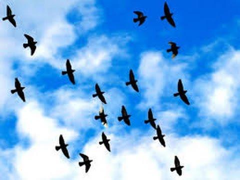 تفسير حلم الطيور في المنام , رؤية الطير بالحلم