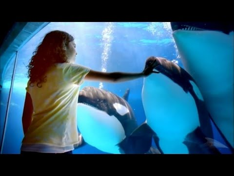 SeaWorld and Former Trainer Face off over Lies and Dying Killer Whales Allegat