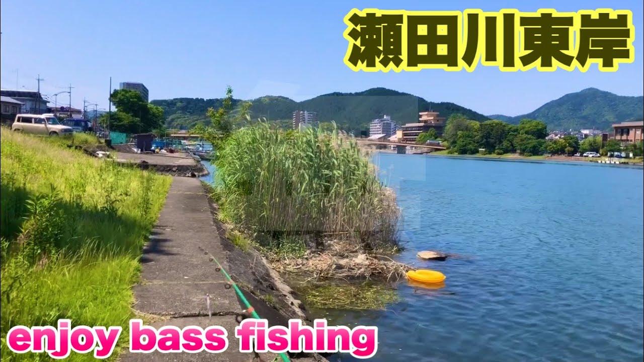 【調査】6月上旬瀬田川東岸の状況
