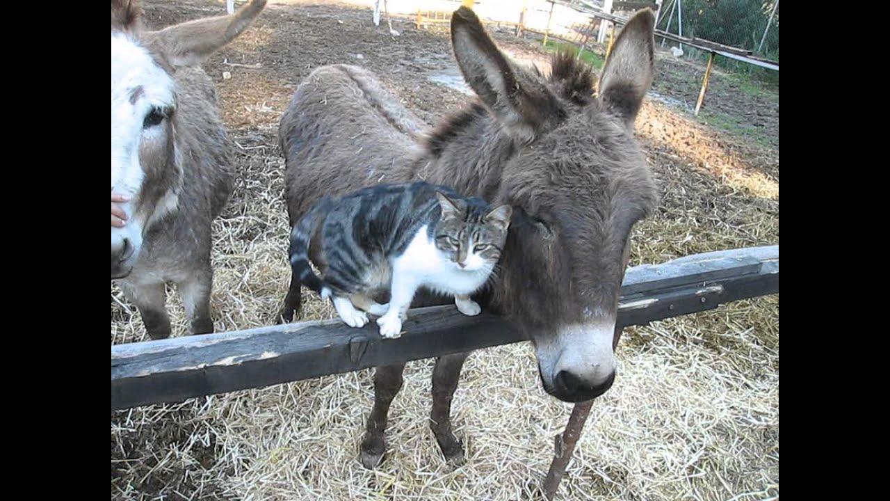 Cat Cuddles With Donkey Extremely Cute Gato Buscando