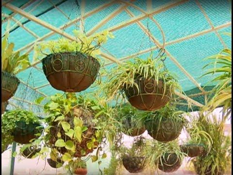 Chatt Par Baghwani - Terrace Garden Tour Special