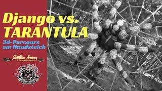 Django vs. TARANTULA   Neue Stationen am Hundsteich   SixtyNine Archery
