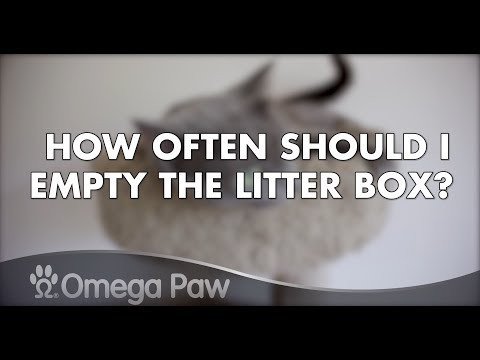 Omega Paw Roll'n Clean FAQ: How Often Should I Empty the Litter Box?