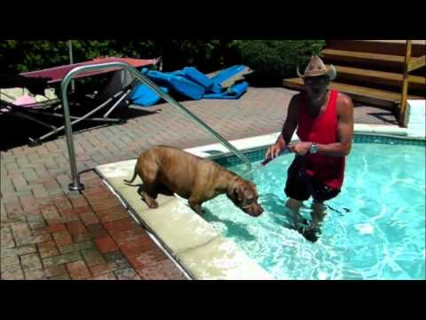 Pit Bull Won't Swim in Pool - DOG INTERVENTION Dog Whispering BIG CHUCK MCBRIDE