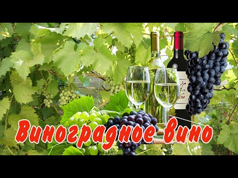 Домашнее вино из винограда. Простой рецепт.