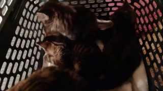 Котята в переноске