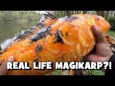 REAL LIFE MAGIKARP?! Sight Fishing For KOI! (Delaware County, PA)