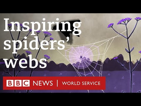 Saving Birds With 'spider Web' Glass - BBC World Service, 30 Animals Podcast