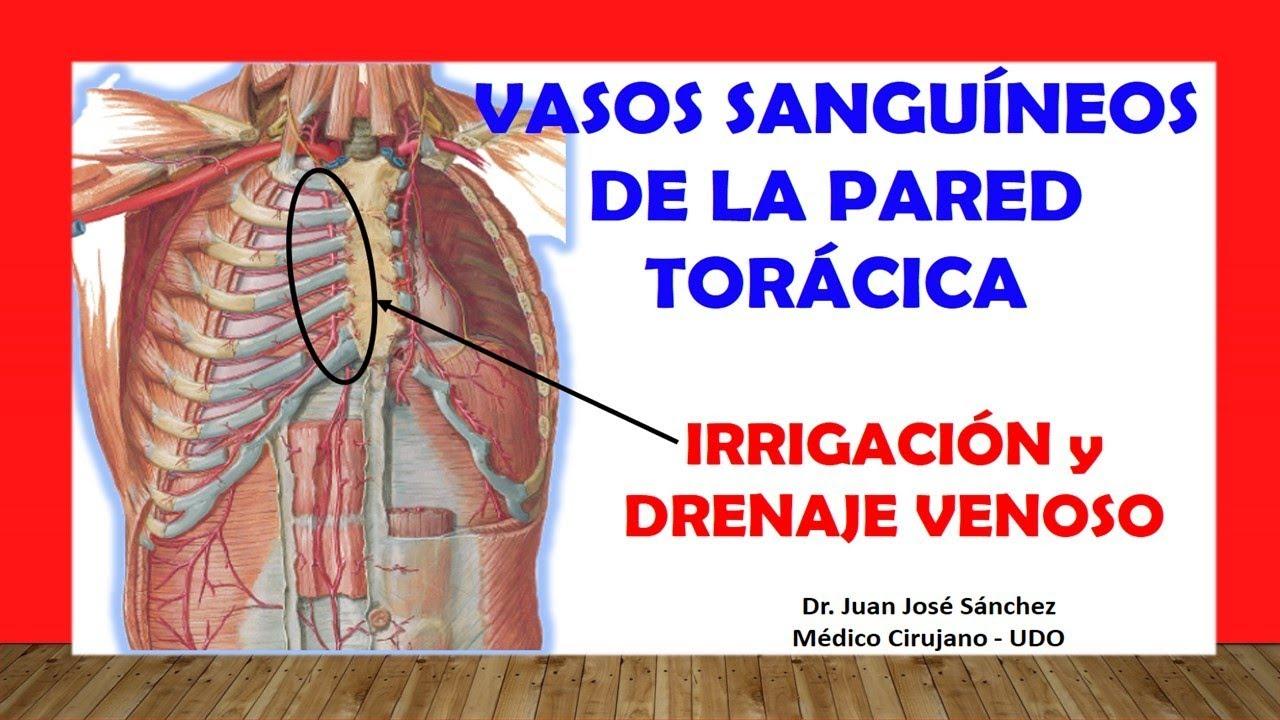 Venas y arterias del hueso