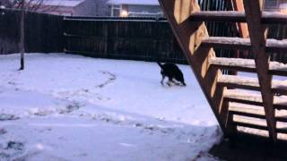 Ranger the Border Collie Plays in the Snow with his Water Bowl