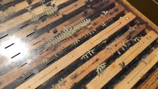 عالم النحل ,حل مشكلة بناء النحل لشمع الزائد على غطاء الخلية