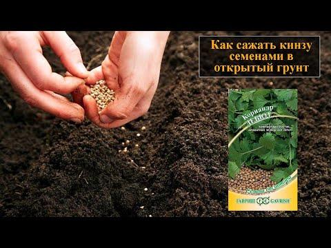 Вопрос: Когда сажают репу семенами, в открытый грунт в Средней полосе России?