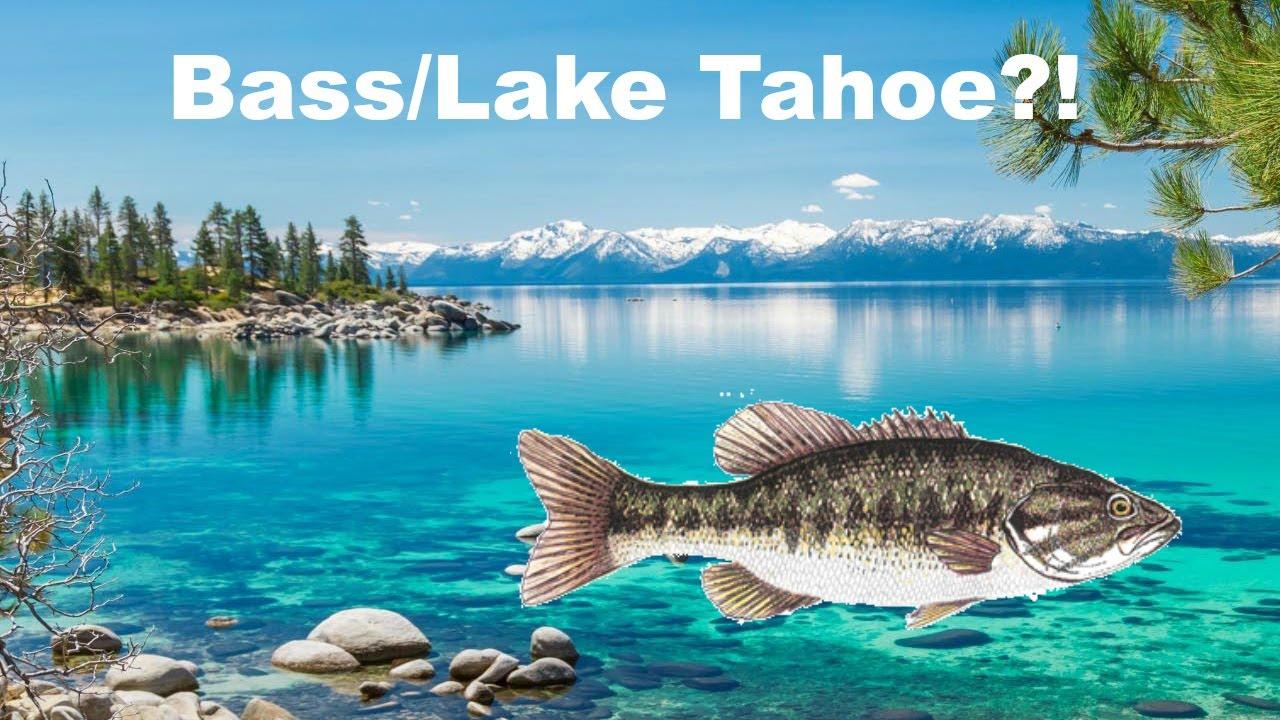 Bass fishing lake tahoe ohio pond fishing youtube for Lake tahoe fish