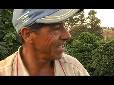 GRÃOS DE OURO EM SAIS DE PRATA   Memórias do Café