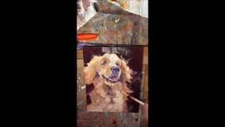 Golden Retriever Oil Painting