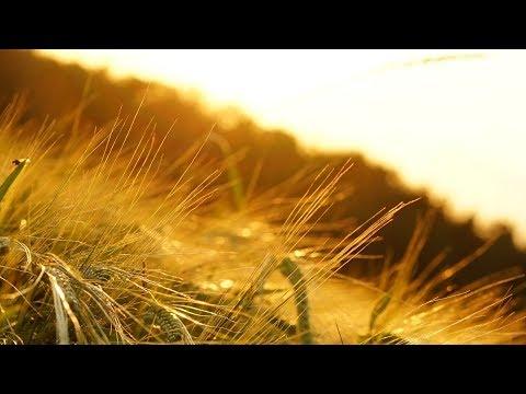 Relaxing Morning Music - Stress Relief in Beautiful Nature (Arkansas)