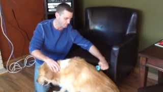 How to use a Deshedding Tool on a Long Haired Dog video by GranPaws