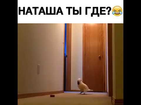 Наташ! Закрой окно! Холодно!😂😂😂
