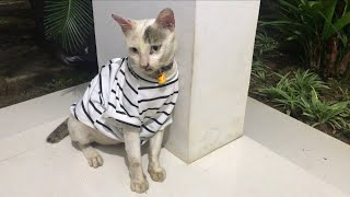 Rescue A Cat From Terrible Condition. Episode 7. Update Of Joshua