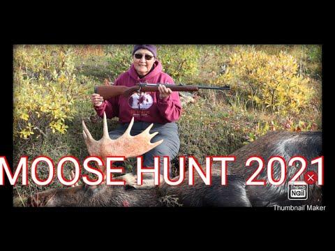 moose hunt 2021