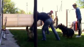 Как сделать чтоб собака охраняла двор