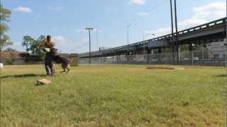 K9 Neko Protecion Training Jacksonville Fl