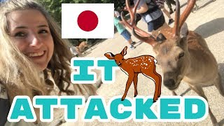 The Vlog With the Deer