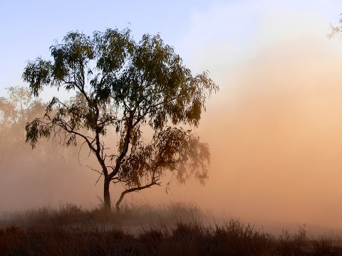 3.2 Million Air Pollution Deaths a Year-Trees Can Help Stop This