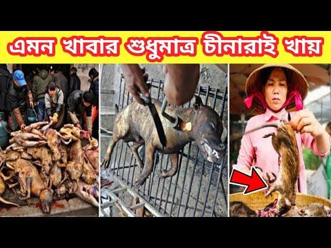 Download চিনের মেয়েরা কি খায়।। না দেখলে বিশ্বাস হবেনা।। Amazing facts bangla || Mayajaal video।।Rohosso Tube