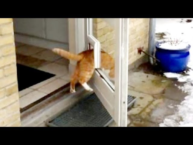try not to laugh at this super funny cat videos collection funny