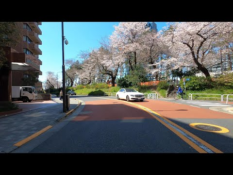 4K DRIVE JAPAN: TOKYO CHERRY BLOSSOM VIEWING - Slow TV ASMR Driving No Talking (POV) Travel World