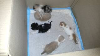 Котятам 2 недели. Учимся ползать