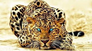 Дикая природа Необычный леопард Совершенная кошка National Geographic Wild