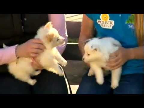 all about animals tv show   rspca foster care program   youtube