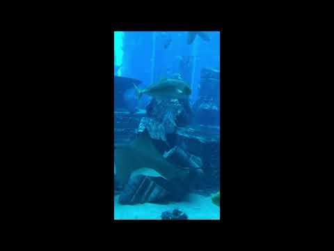 Atlantis The Palm, The Lost Chambers Aquarium, Dubai