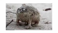 Yeah boi frog