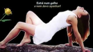 Soneto Rosa Amarela & música Paul Mauriat - A summer place