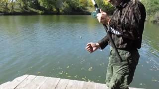 Ловля окуня на живца осенью, на поплавочную удочку