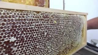 Honigwaben entdeckeln mit Heißluft - b.tree Imkerei