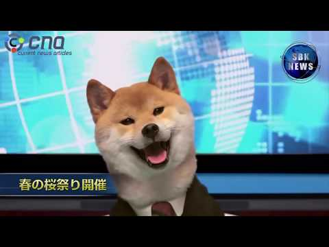 Dog Became Famous Anchor News In Japan