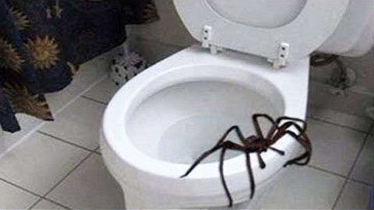 Download giant spider attacks man..