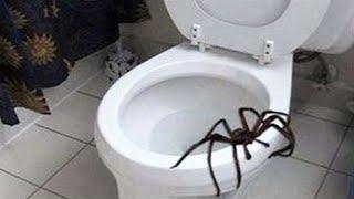 giant spider attacks man..