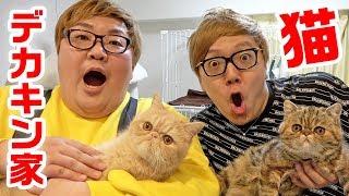 デカキン家に突撃したら猫ちゃんかわいすぎた…【ブチャ吉&ミニたん】【ヒカキンTV】